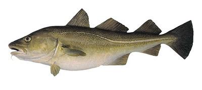 с чем есть рыбу при правильном питании