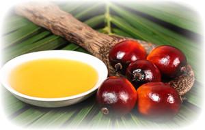 palmovyiy-olein