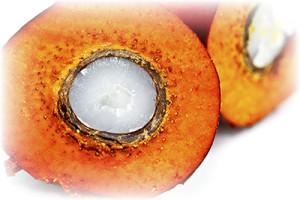 palmovyiy-olein-v-3