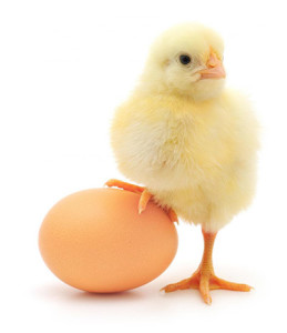 jajco